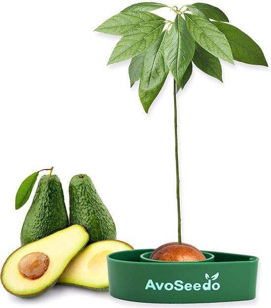 Avocado Boom - Kweek Kit