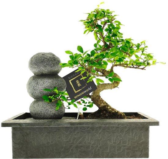 Bonsai plant met waterval